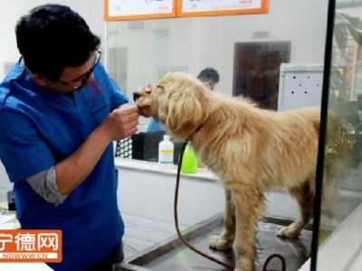 2017宁德泰迪犬领养 4月22日中国同日领养日